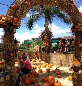 Flamingo Road Nursery - Fall Festival